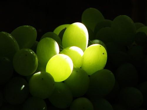Grape 葡萄