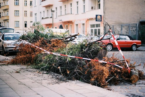 Tree carnage, close up
