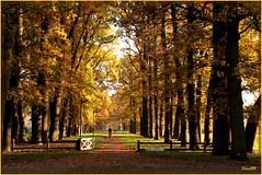 7nov08 Gravenallee Almelo.. (guus timpers) Tags: gravenallee almelo herfst herfsttinten herfstkleuten autumn autumncolours huize beuken beukenlaan gracht slotgracht