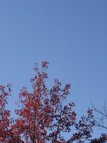 Blue sky, Red tree