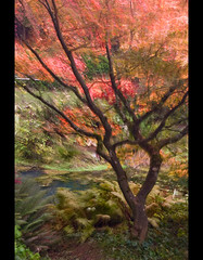 Fall impressions....movement II (mcazadi) Tags: tree fall colors movement bravo you branches magic sensational fabulous caught blueribbonwinner firstquality abigfave imprssionist platinumphoto infinestyle flickrdiamond goldstaraward allkindsofbeauty