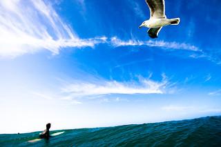 Its a bird its a plane.Its a bird
