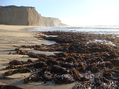 MartinsBeach_2007-092 (Martins Beach, California, United States) Photo