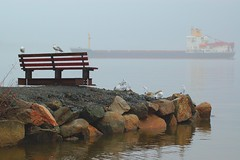 Ship In the Fog (roundapple) Tags: fog ship gulls hudsonriver rockland stonypoint loverofnature roundapple hannapple
