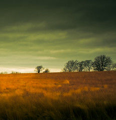 November Winds (Loren Zemlicka) Tags: november autumn trees sky orange fall nature field grass wisconsin clouds rural canon landscape gold midwest wind farm horizon country hill gray overcast 5d 40mm agriculture 2008 wi canonef1740mmf4lusm canoneos5d lorenzemlicka