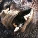 Freaky Mummy Cow