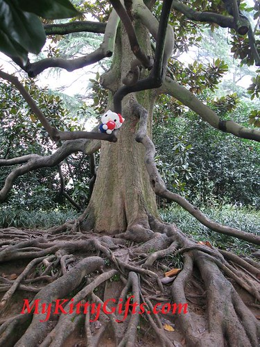Hello Kitty Climbing Old Tree in Peony Garden, HangZhou