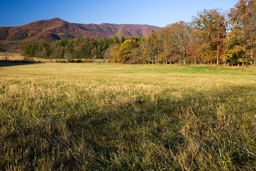An Autumn Pasture