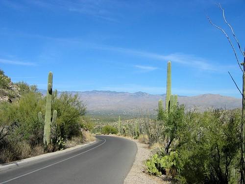 saguaro-1