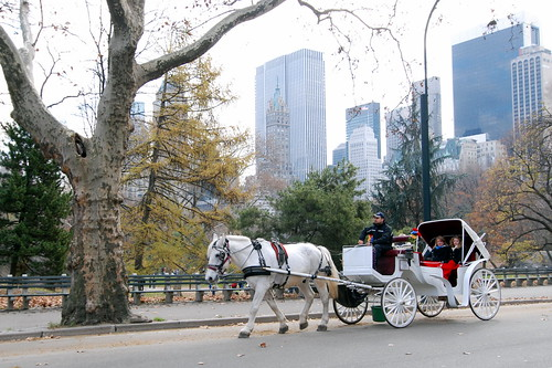 Horse and Carriage Ride in Central Park