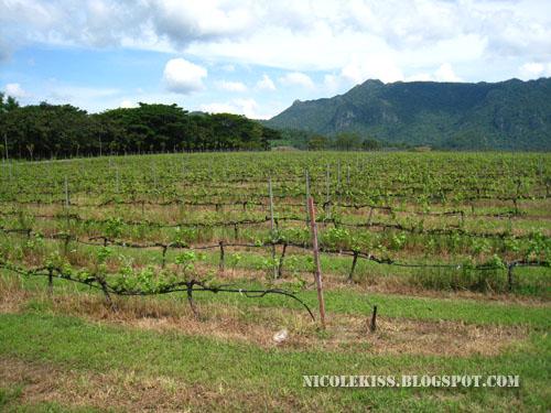 PB valley vineyard minus me