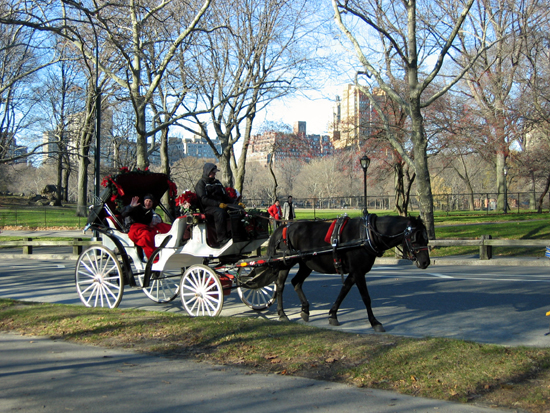 Carriage in Central Park (Click to enlarge)