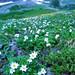 奥穂高岳:Heavenly side of mountain