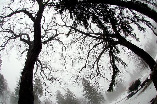 Graveyard Trees