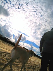 Let's play! (dangeri.away) Tags: friends sea dog chien pet beach loving clouds relax seaside sand labrador happiness perro doc amici doggie amistad perrito petlover thelittledoglaughed betogether doggielife