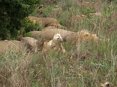 Nature Reserve-South Africa (aleabailey) Tags: africa mozambique pemba