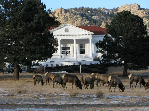 Elk Herd by Stanley Hotel
