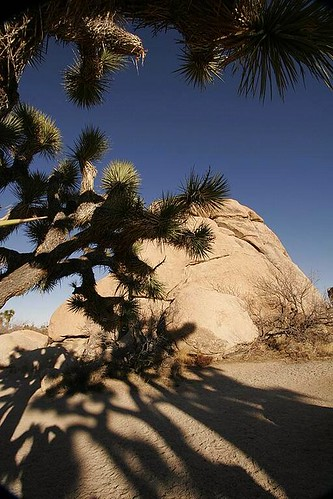 Joshua Tree National Park - shadows