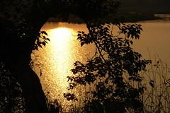 New morning, new year, new beginnings (Road Blog) Tags: morning sunrise dawn newyear maharashtra 2009 happynewyear konkan vengurla goldensunrise sawantwadi