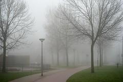 Misty New Year (Cristiano Betta) Tags: trees mist misty arnhem gras nl afnikkor50mmf18d