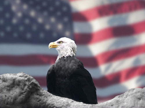 Eagle and American Flag by Bubbels