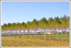 campagna veneta (DrMonia) Tags: trees alberi landscape italia country campagna paesaggi veneto eraclea yourcountry