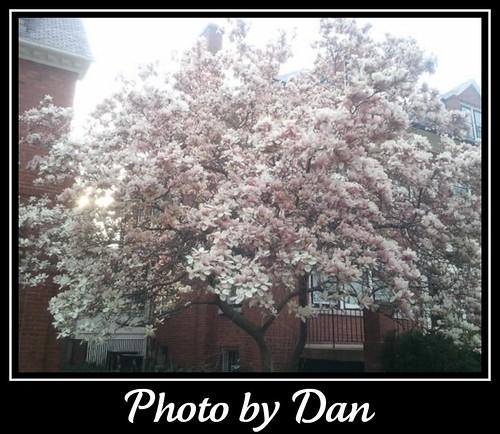 Photo by Dan