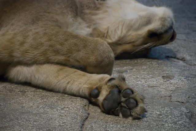 D4 MGM lions 2