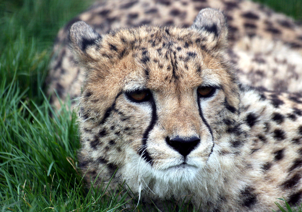The fastest animal on earth...except today..cause it's my day off...:O)