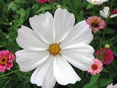 devine..... (~~~~Karthik.S~~~~) Tags: show flower taken