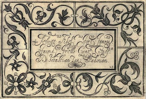 Bertozzi + Zanilla 1604 Lace Typography g