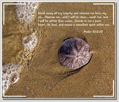 Wash My Sins Away (honey 77) Tags: ocean sea white beach nature wet water hope sand heart god spirit prayer jesus lord christian wash seashell sanddollar christianity inspirational seashore scripture gospel renew seafoam sins psalm bibleverse cleanse inspiks pureheart iniquity
