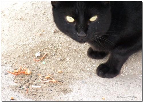The cat that ate seafood / El gato que comía marisco