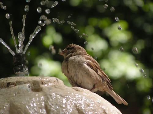 Una buena ducha