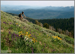 Near Teton Pass (Photo-John) Tags: mountains flower bike bicycle cycling mountainbike olympus mtb wildflowers wyoming tetons jacksonhole blackcanyon tetonpass fourthirds e520