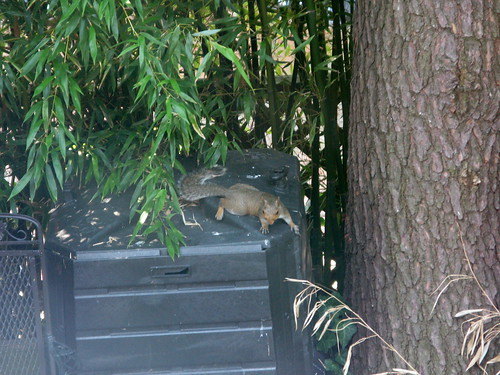 I'm sure this squirrel is stalking me