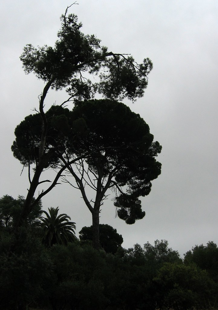 Parque das Conchas (20 Julho 2008)