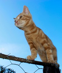 Mr. Blue Sky (Urs Wachter) Tags: blue red sky baby pets cute rot cane cat schweiz switzerland kitten chat pretty babies suisse mr tabby kitty himmel perro gato kitties mister katze blau puss gatto aargau kats overload ktzchen chaton urs wachter gattini httli oberkulm oreengeness goldstaraward llovemypics sonyalphadslra350