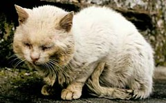 Abandoned Cat (Animals Abused & Abandoned) Tags: cat kitten abandonedcat