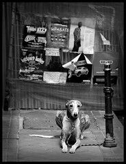 Patiently Waiting (Manu CV) Tags: madrid dog greyhound zeiss waiting loneliness perro m42 wait soledad desperation espera desesperacion galgo czj patiently sonya100 carlzeissjenasonnar135mmf35