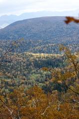 黄葉の森に一筋の光