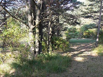 promenaed dans les sous bois de caussols.jpg