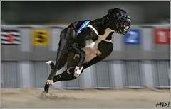 Greyhound Nike_Startkasten