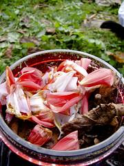 Patki (hrabia Pawe) Tags: red white leavs czerwony licie biay patki kwiati