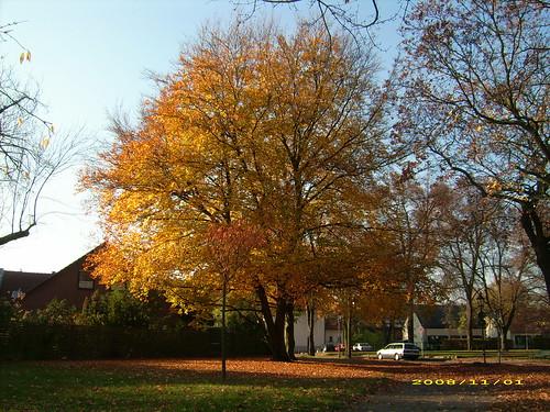 Hermsdorf im Herbst