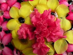 Up close with Flowers (r-sethu-sankar) Tags: macro dakshinchitra rssankar rsethusankar