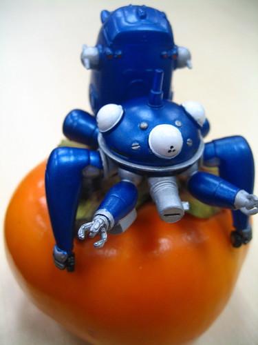 Tachikoma on persimmon