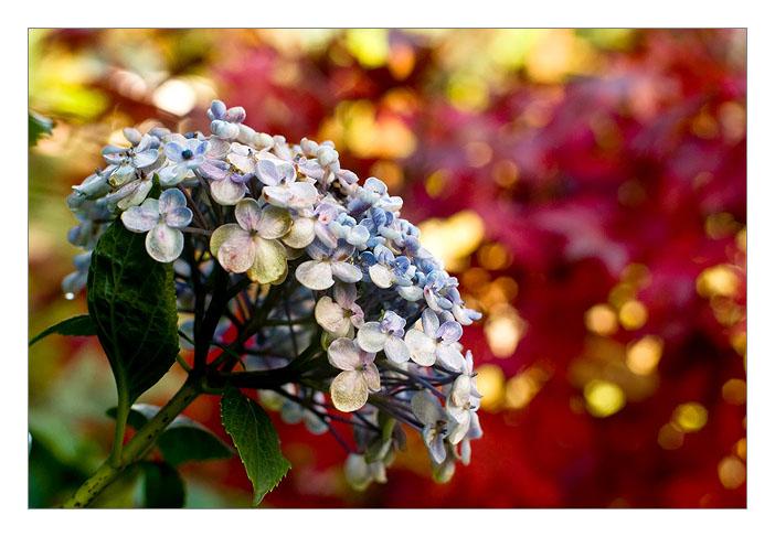 http://farm4.static.flickr.com/3228/3014700639_b5fde16028_o.jpg
