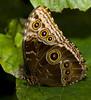 Hidden Beauty (Theresa Elvin) Tags: butterfly sheffield tropical tropicalbutterflyhouse northanston sheffieldbutterflycentre
