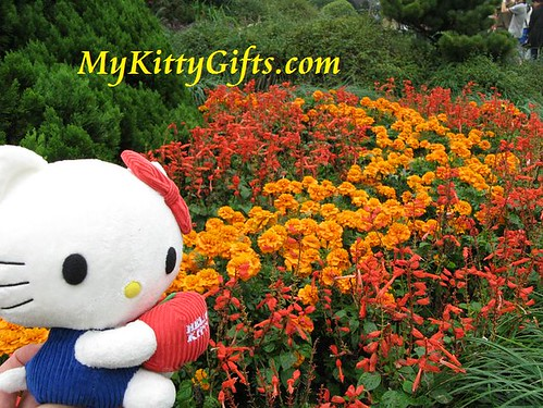 Hello Kitty with Flowers in HangZhou